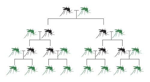 What are gene drives
